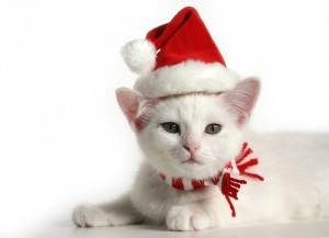 Xmas cat wishes you a merry christmas
